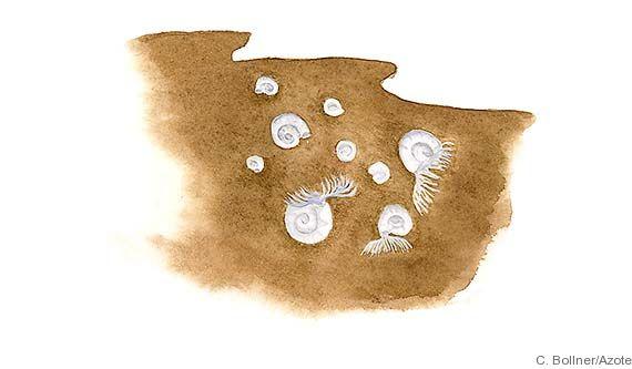 Artbild