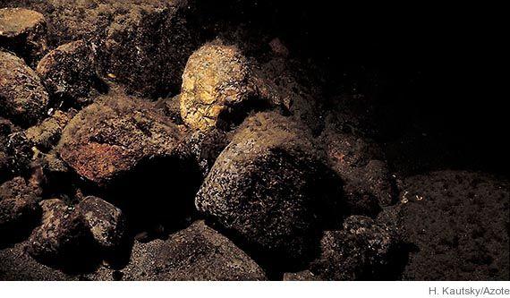 Fossilfynd kan vara ny anmoder