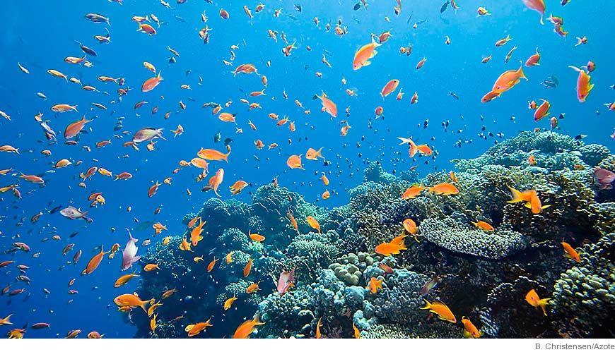 Bild - Försurning av haven - nytt problem i klimatförändringens spår