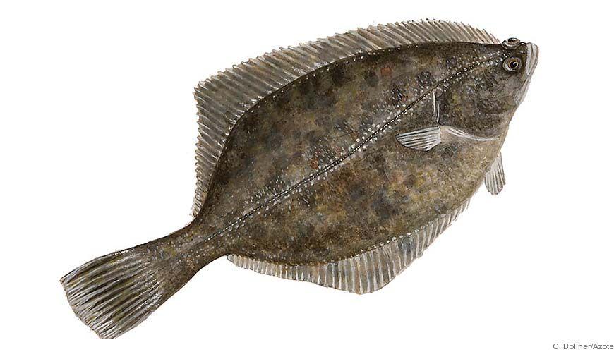 Bild - Fiskbestånd och miljö i hav och insjöar - Resurs- och Mijööversikt 2009