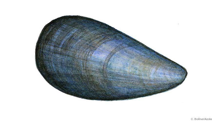 Bild - Kontroll av svenska musselodlingar
