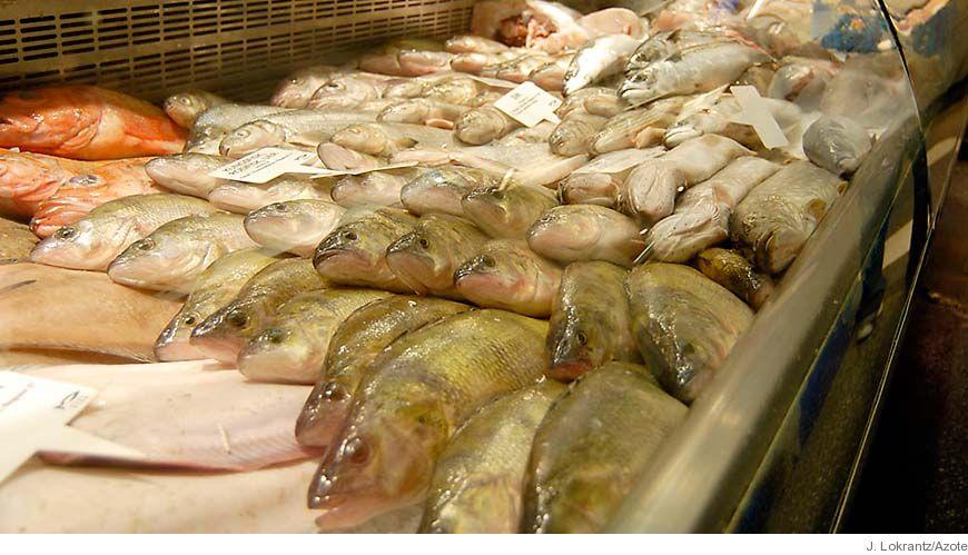Bild - Ekonomisk information rörande fiskerinäringen
