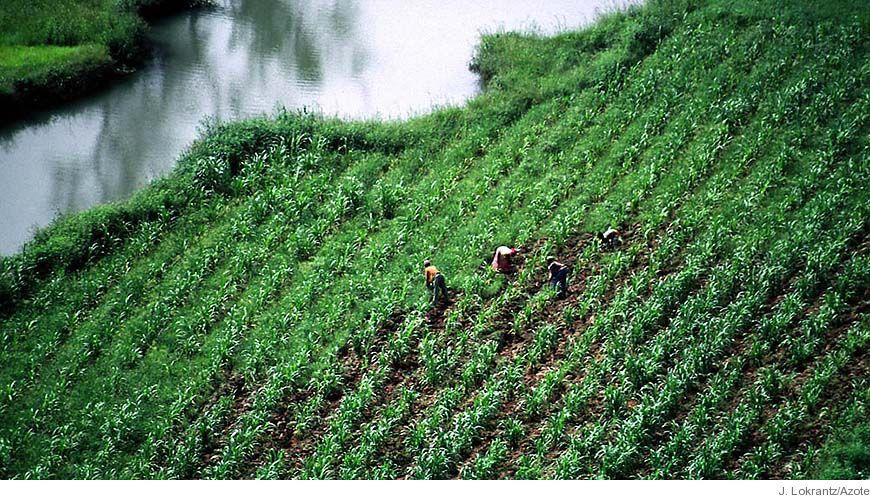 Bild - Global handel, matproduktion, och ekosystemstöd: Synliggörande av sambanden.
