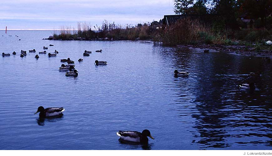 Bild - Riskbedömning av kemiska blandningar i vattenmiljön