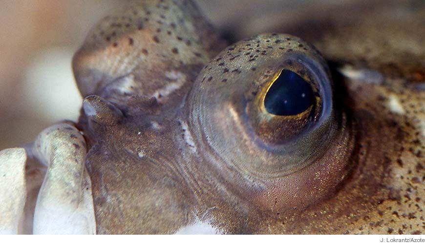 Bild - Fisk i Öresund