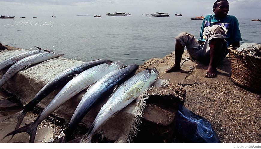 Bild - Oceanernas framtid: Styrning av globalt fiske i tidsåldern Antropocene