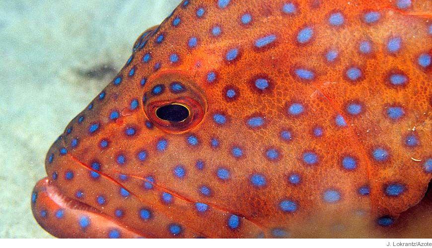 Bild - Kolbindningsprocesser i tropiska sjögräsängar