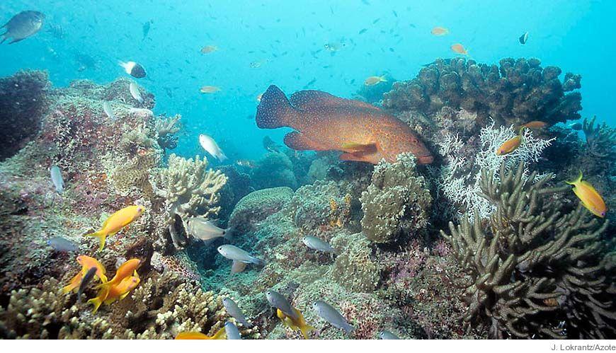 Bild - Korallrev och fisk: betydelse för förvaltning och fiske
