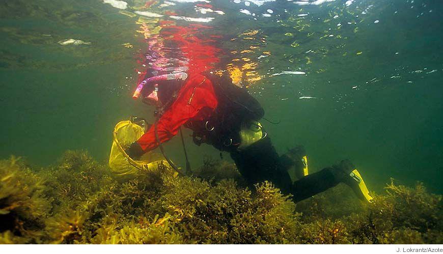 Bild - Nytt övervakningsprogram för kust och hav
