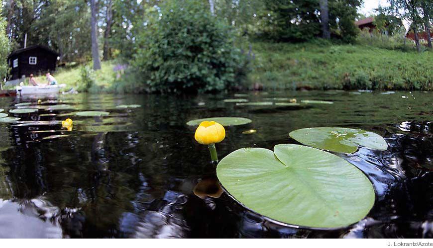 Bild - Status, potential och normer för sjöar, vattendrag, kustvatten och vatten i övergångszon