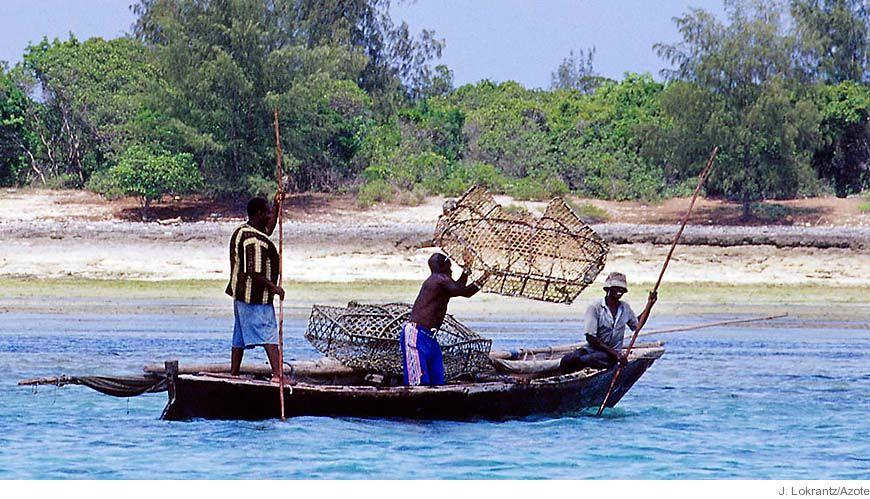 Bild - Mänskliga störningar i sjögräsängar: Vad betyder de för kustzonsförvaltning?