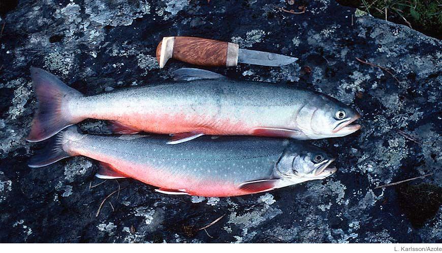 Bild - Fritidsfiske och fritidsfiskebaserad verksamhet