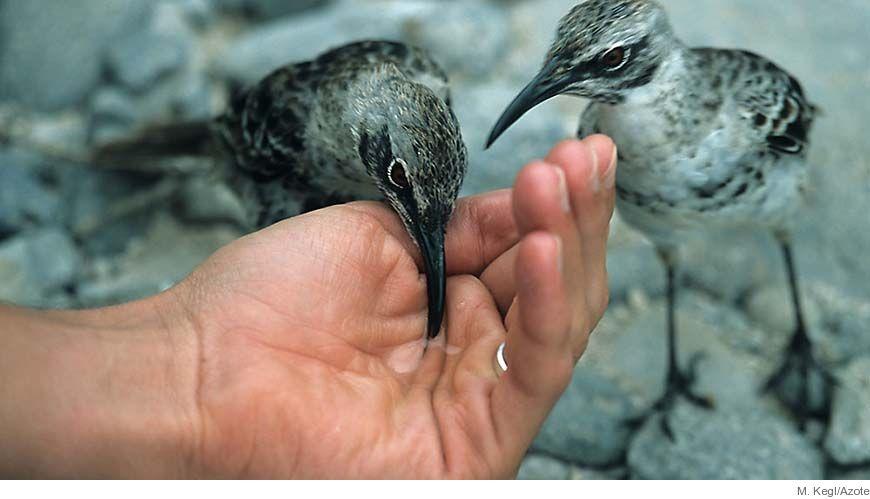 Bild - Strategi för information om miljötillståndet i havet