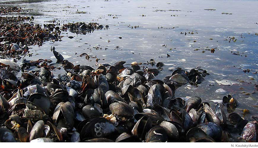 Massdod bland delfiner i usa