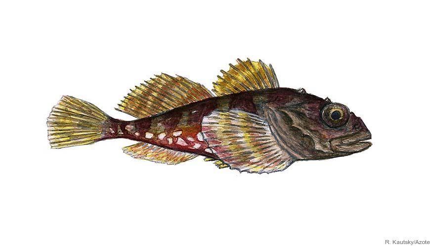 Bild - Klimat och fiske påverkar kustfisken