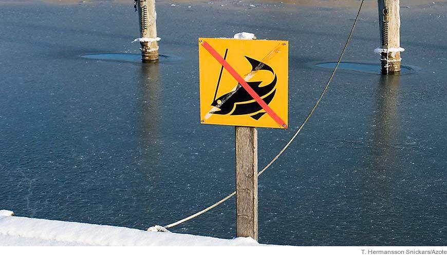 Bild - Dioxiner i östersjöns fisk - ett hot mot svenskt fiske