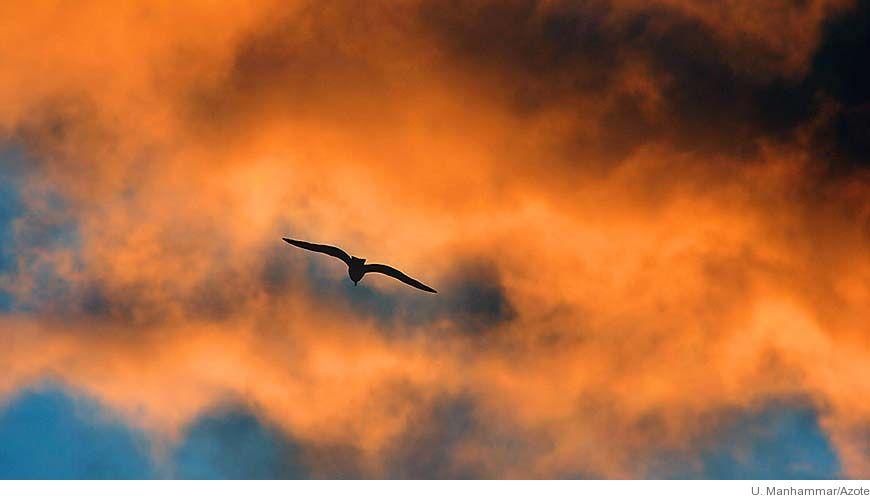 Bild - Fågeldöden - detektivarbete för att finna orsaken