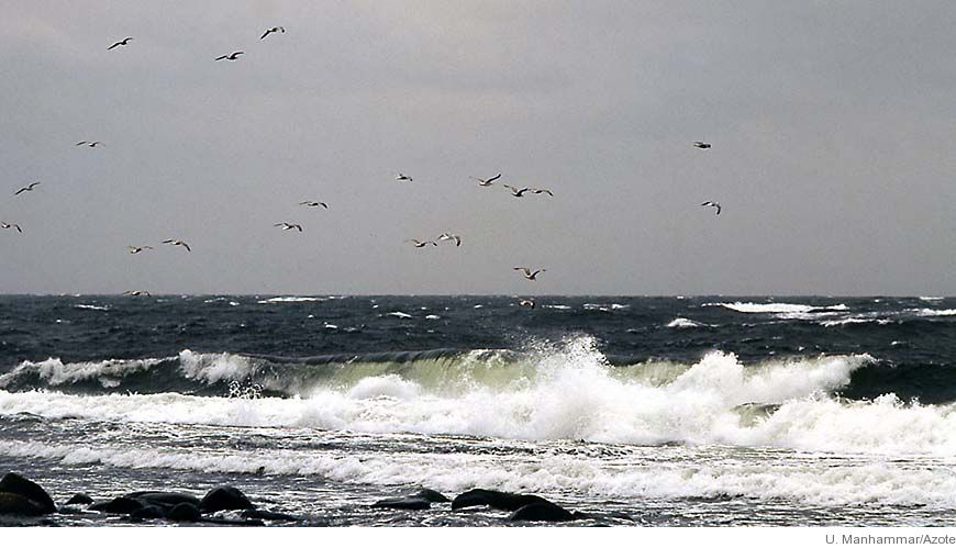 Bild - Havet 2007 - Om miljötillståndet i våra havsområden