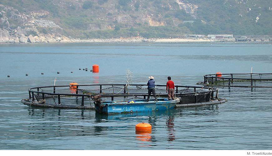 Bild - Orsaker och effekter av geografiska kopplingar mellan vattenbruk och skyddsvärda ekosystem