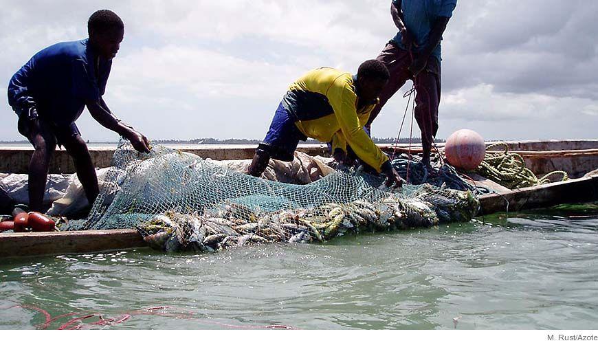 Bild - Fisk till mat och ekosystemfunktion: Fiske, handel och nyckelprocesser för ekosystemet vid korallrev