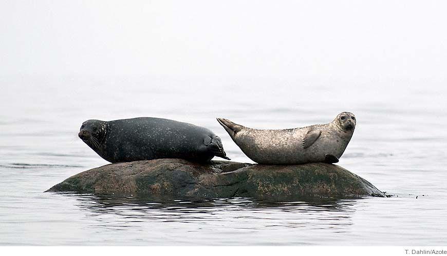 Nyheter, forskning och fakta om havet
