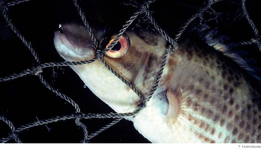 Intensivt fiske g r fisken mindre for Your inner fish sparknotes