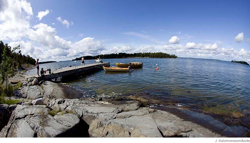 Bild - Flera krafter påverkar Östersjöns näringsväv och hur den svarar på miljöförändringar