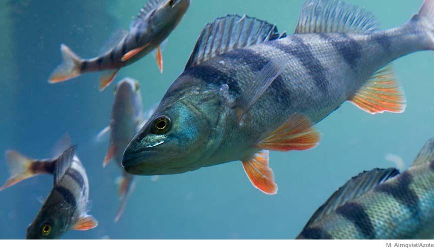 fakta om fiskar