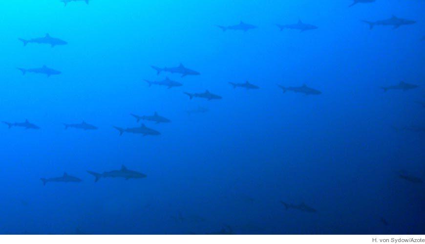 Bild Hajar kan navigera med hjälp av jordens magnetfält