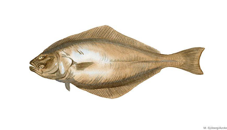 Bild - Fysiologiska insikter för marina fiskarter i en föränderlig värld