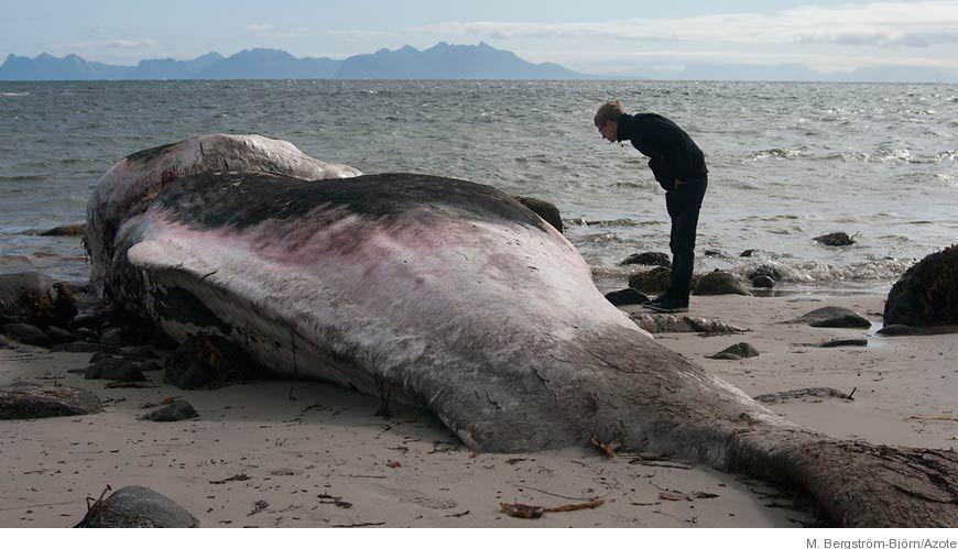 döda havet djur