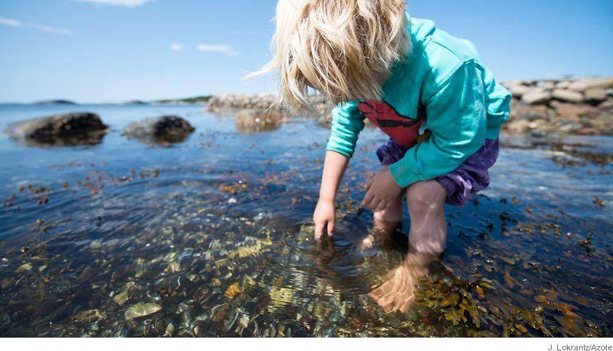 Bild - Digitala teknologier som stöd för lärande om den marina miljön