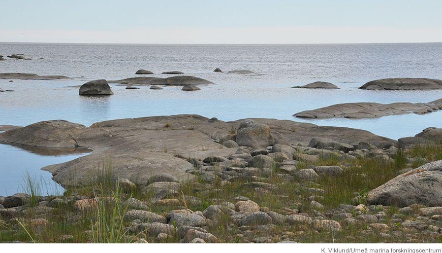 Bild - Biologisk inventering av havsbottnar kring Örefjärden, Snöan och Bonden