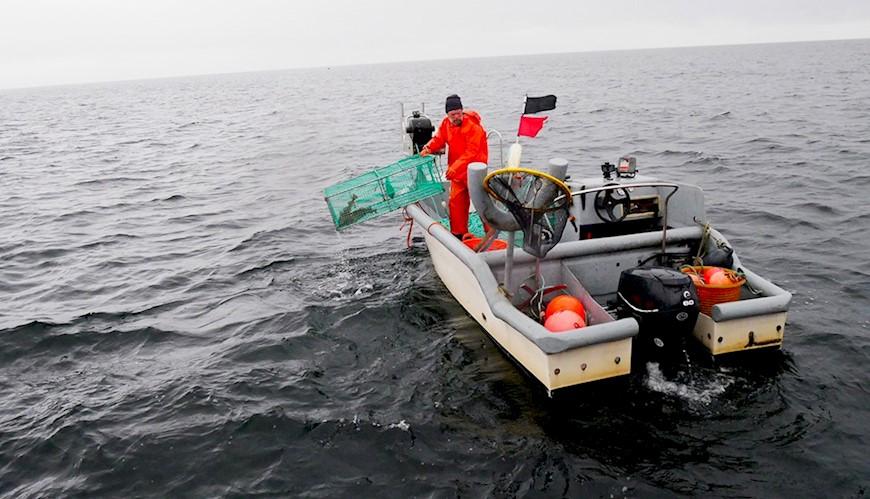 Sälsäkert torskfiske med burar